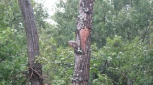 squirrel, Hurricane Irene