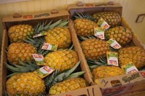 pineapple plantation Dole Hawaii