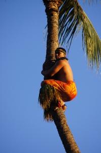 luau, Hawaii, palm tree climbing
