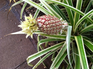 Pineapple Hawaii